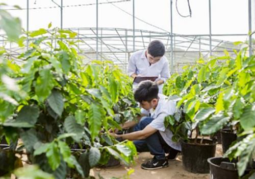 Trung cấp Trồng trọt và Bảo vệ thực vật