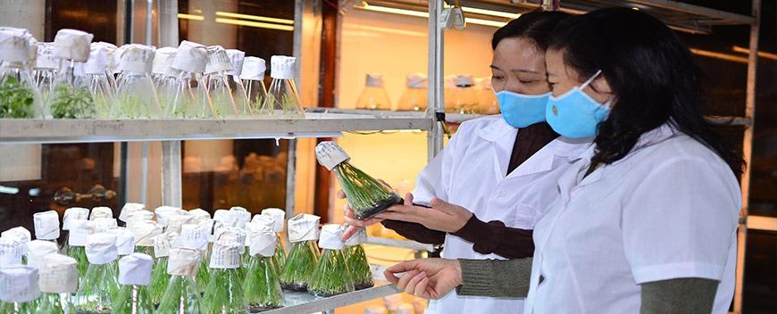 Trung cấp Bảo vệ thực vật cấp tốc