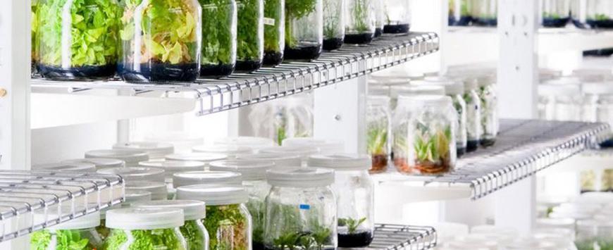 trung cấp bảo vệ thực vật