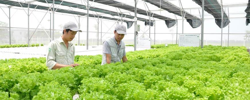 Trung cấp nông nghiệp
