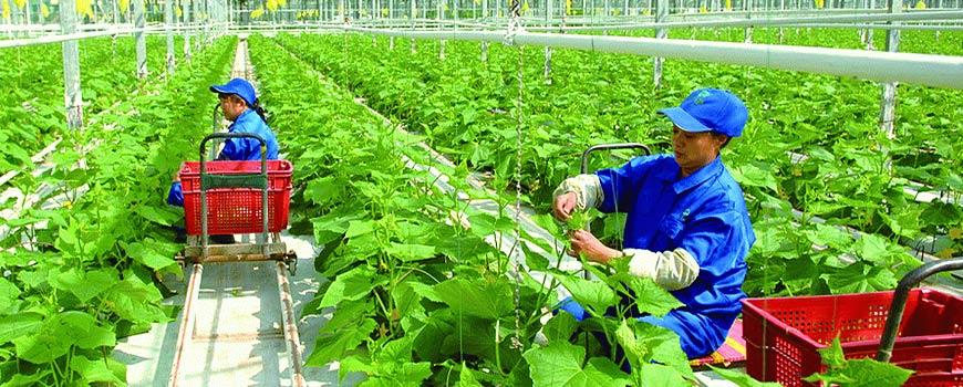 Trung cấp nông nghiệp online từ xa