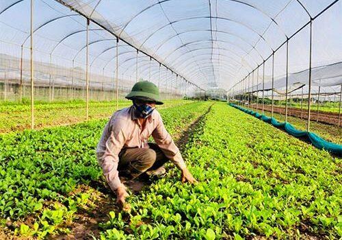 tuyển sinh trung cấp nông nghiệp
